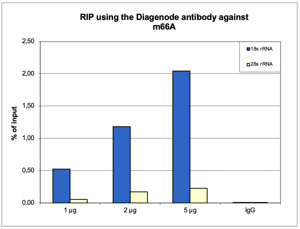 m66A Antibody validated for RIP