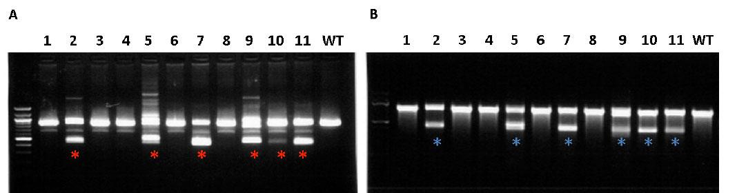Efficient mutagenesis