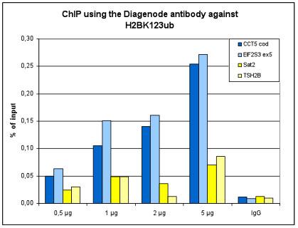 H2BK123ub Antibody for ChIP