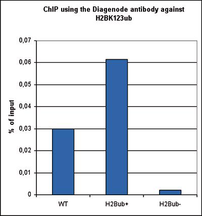 H2BK123ub Antibody ChIP Grade