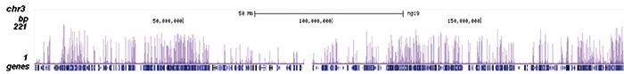 H3K79ac Antibody ChIP-seq Grade