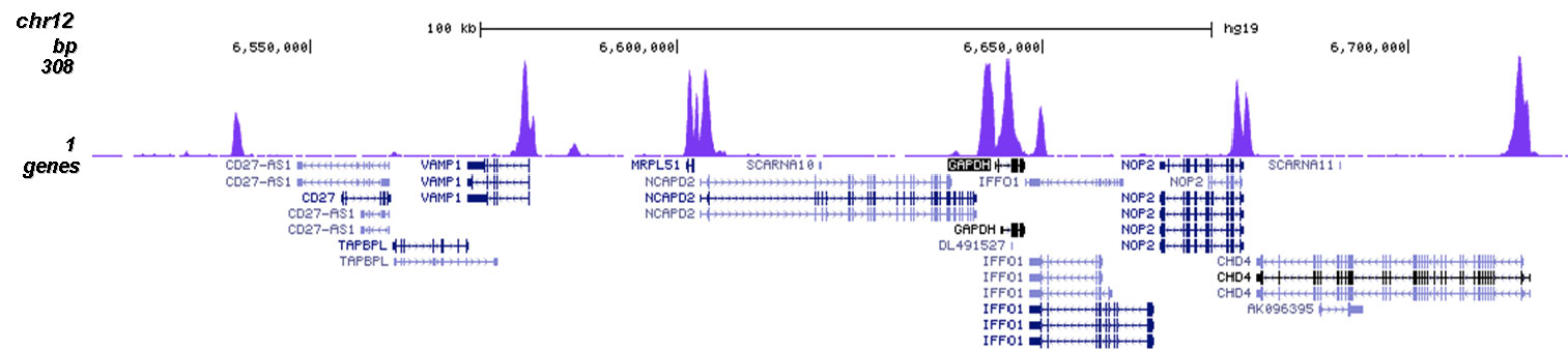 H3K23me2 Antibody validated in ChIP-seq