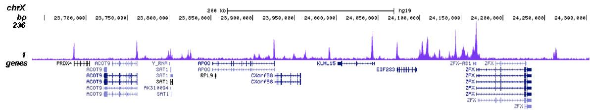 H4K20ac Antibody for ChIP-seq