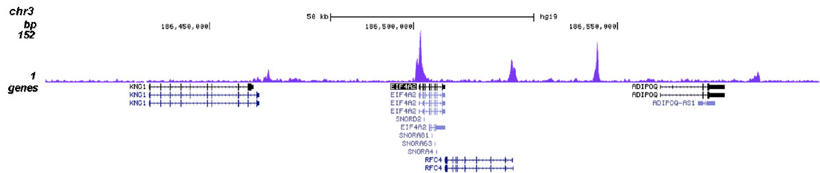 H4K20ac Antibody for ChIP-seq assay