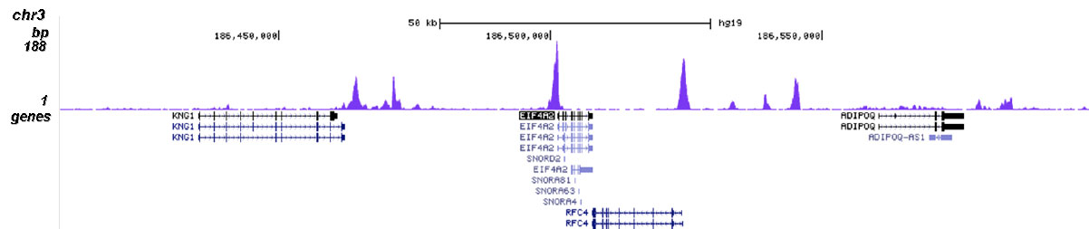 H2A.ZK4ac Antibody for ChIP-seq assay