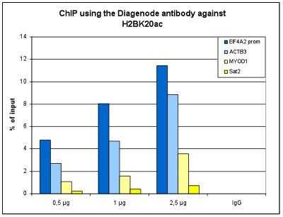 H2BK20ac Antibody ChIP Grade
