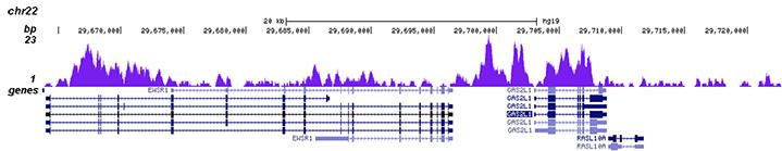 H3K4me1 Antibody validated in Chip-seq