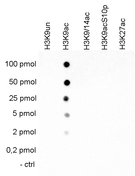 H3K9ac Antibody Dot Blot validation
