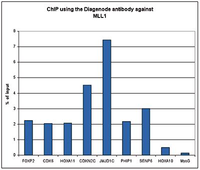 MLL1 Antibody ChIP Grade