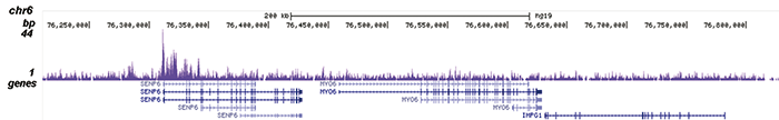 MLL1 Antibody validated in ChIP-seq