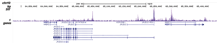 AF9 Antibody validated in ChIP-seq
