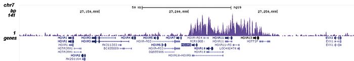 AF9 Antibody ChIP-seq Grade