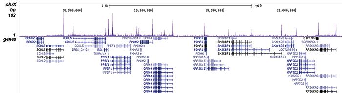 H4K12ac Antibody for ChIP-seq