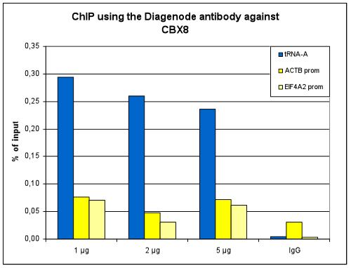 CBX8 Antibody ChIP Grade