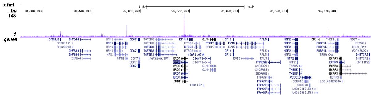 CBX8 Antibody for ChIP-seq