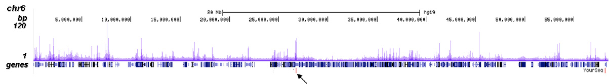 CBX8 Antibody for ChIP-seq assay