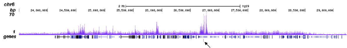 CBX8 Antibody validated in ChIP-seq