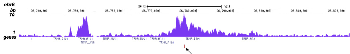 CBX8 Antibody ChIP-seq Grade