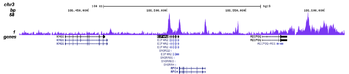 BRD4 Antibody validated in ChIP-seq