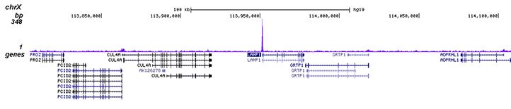 PPARg Antibody validated in ChIP-seq