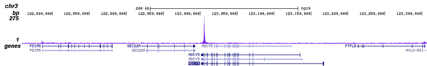 SUV39H1 Antibody for Chip-seq assay