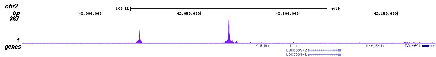SUV39H1 Antibody Chip-seq Grade