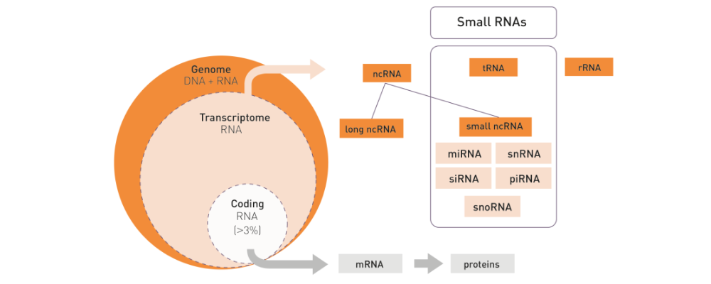 small RNA sequencing kit