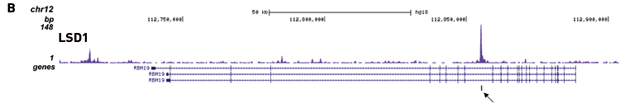 ChIP-seq figure B