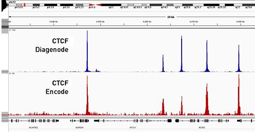 Chromatin immunoprecipitation
