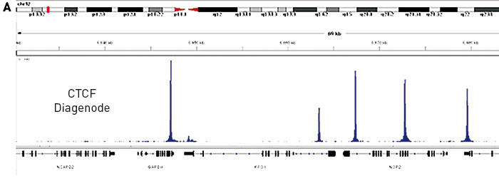 CTCF Diagenode