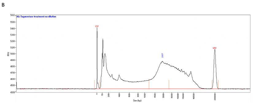Tagmentase Tn5 transposase