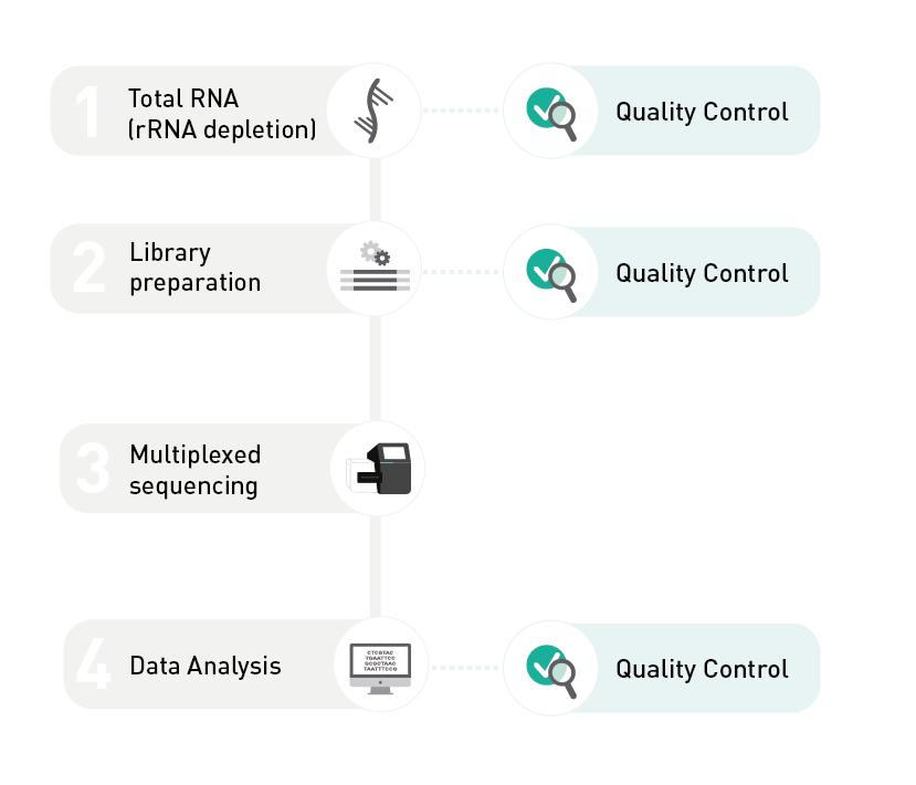 Total RNA-seq Service
