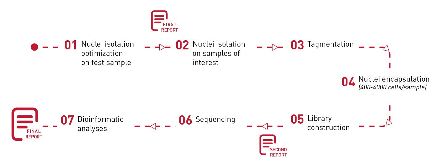 ATAC-seq bioinformatic analyses