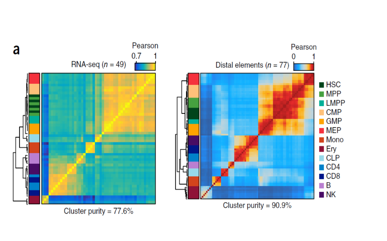 ATAC Sequencing for Chromatin Profiling